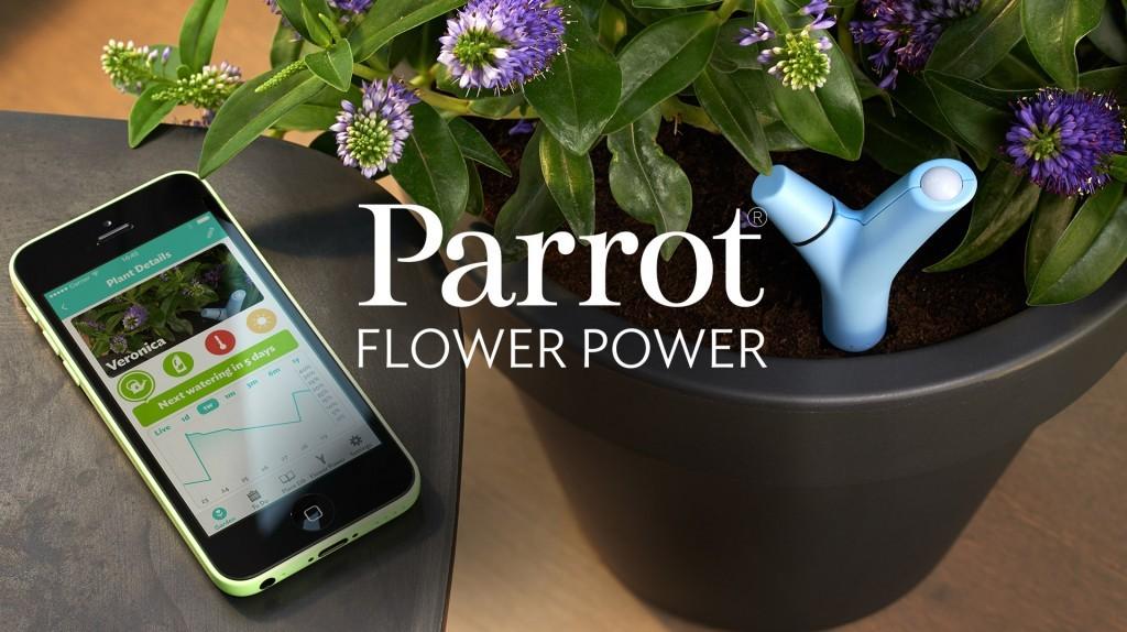 Parrot-1-1024x574